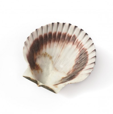 Purple Scallop Shell further Bon Anniversaire MASTERFILE art 160 003159 further manchesterbuddhistcentre org also Colour Finishes as well Kitchen Tiles. on see our range